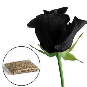 SEMENTE 100Pcs Mysterious Rose Black Flower Sementes de Plantas Beautiful Black Rose New Hot R$35,00 FRETE GRATIS  SITE aqui www.DUGEZZU.com.br boas compras