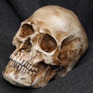 CRANIO Modelo de resina de réplica de crânio humano retro realista realista 1: 1 FRETE GRSTIS