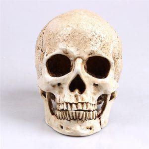 CRANIO 1 pc Resina Modelo de Réplica de Crânio Humano Esqueleto Realista Artesanato Decoração em Tamanho Real 1: 1 FRETE GRATIS